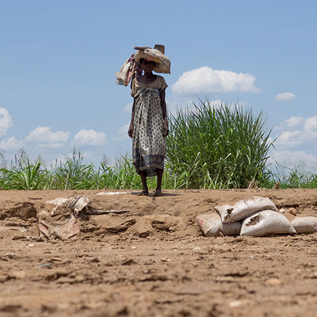 A woman in a field in Malawi