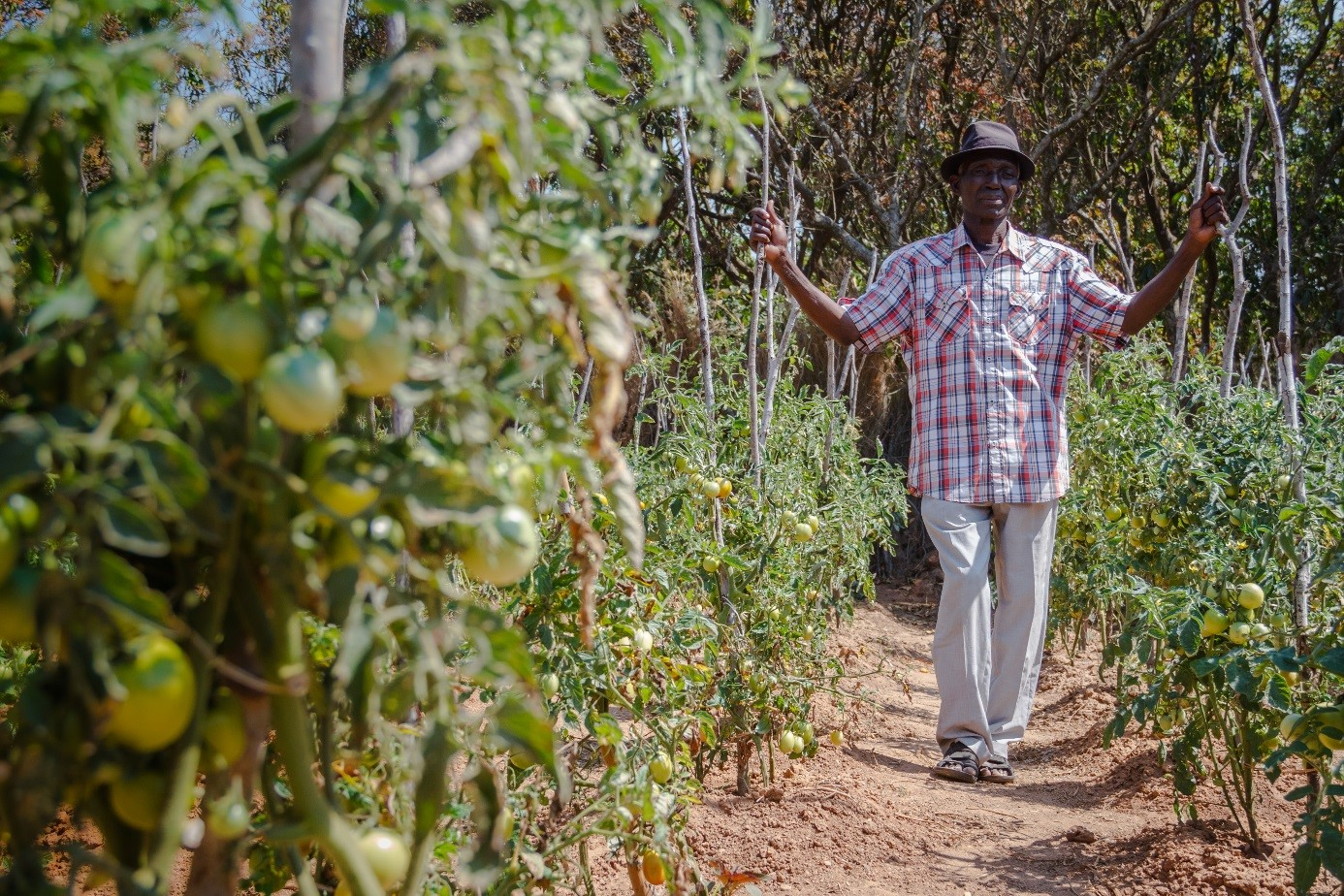 Christian Aid Scotland empowering farmers in Zambia through Making Agriculture a Business