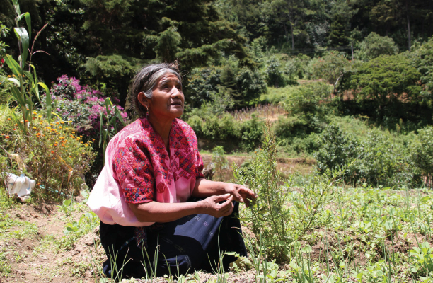 Isabel Catinac Xum, a 63 years old Maya K'iche woman, is an enthusiastic participant of the project's trainings. She lives in Santa Catarina Ixtahuacán and a founding member of Alane, an association of women farmers and artisans