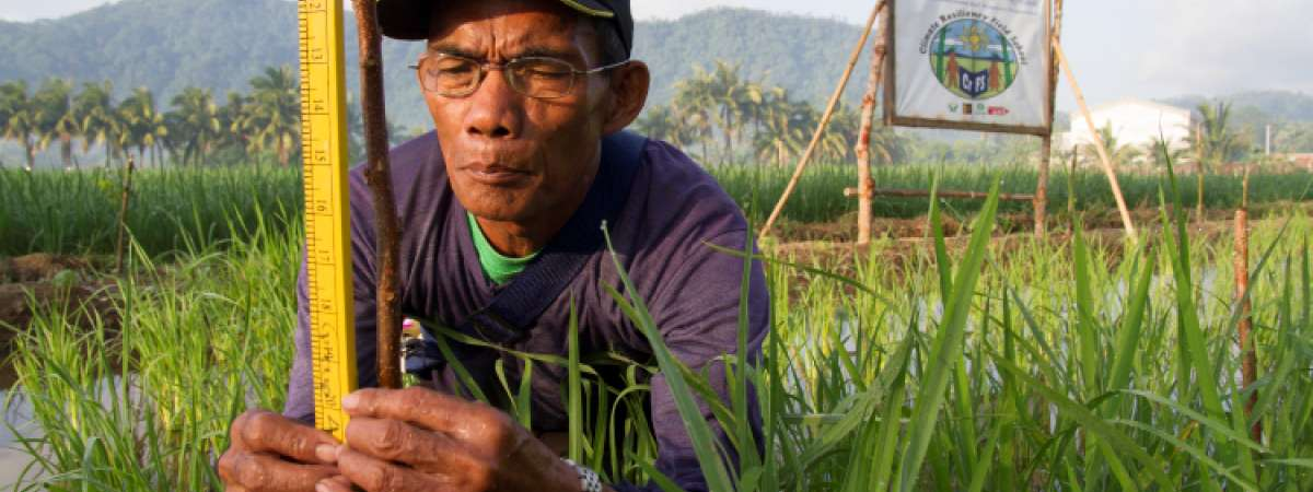 Crop farmer in the Philippines