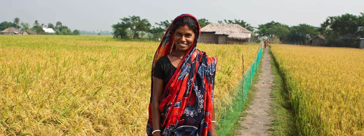 A woman stands in a field full of yellow crop in Bangladesh