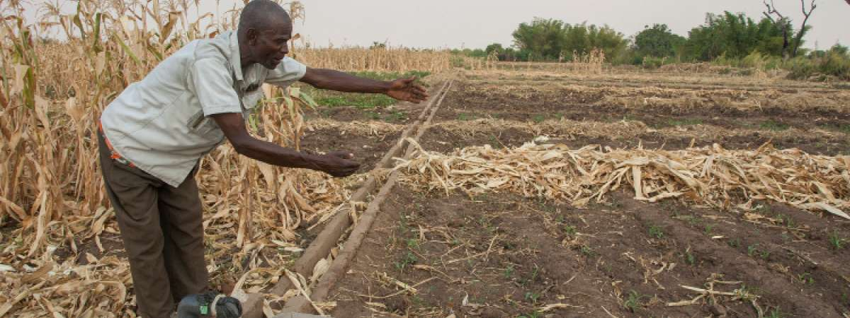 Irrigation of drought-affected land in Malawi