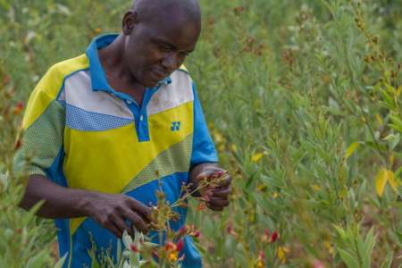 A man stands in a field in Malawi holding a flower
