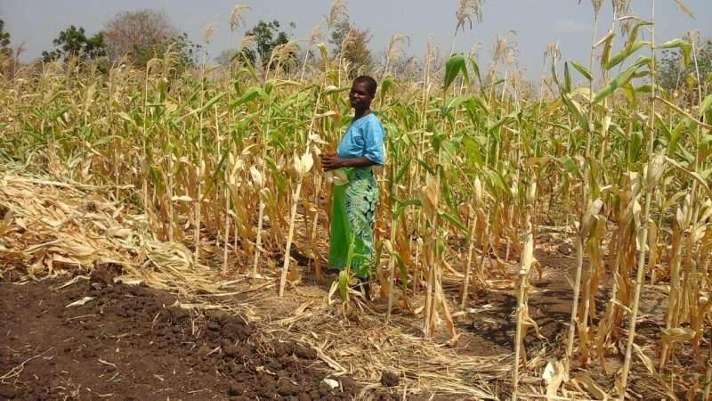 A woman in a field in Malawi which has been affected by severe flooding and drought