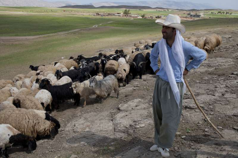 Zanan with herd of goats and sheep in Iraq - Christian Aid
