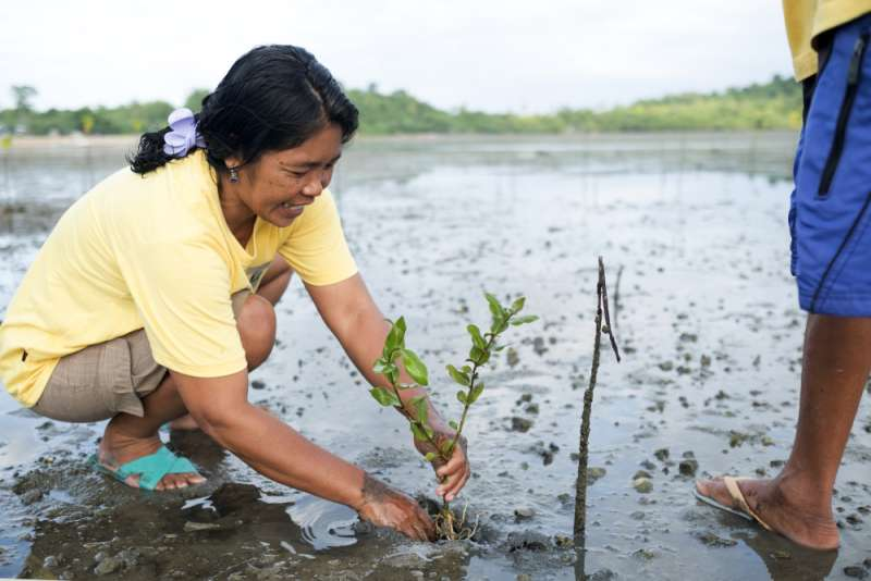 Eva plants mangroves, Philippines