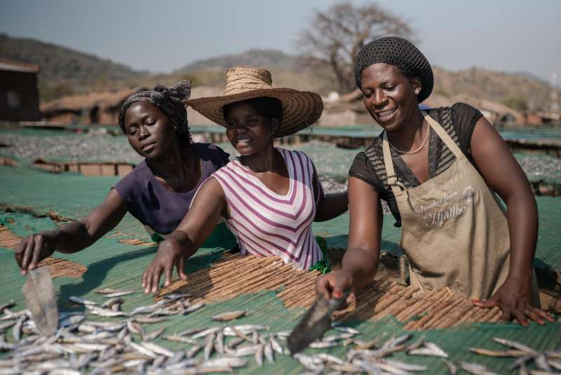Anne Phiri (left), Maria Chindamnba and Tikambenji Chirwa dry fish to sell at the local market in southern Malawi.