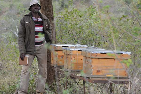 Daniel Muli Mwanzau at his home in Makueni Country Kenya. He stands over his modern hives which he bought from Christian Aid Kenya's social enterprise programme Nyuki Hubs..
