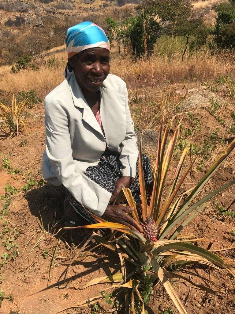 Luciana shows off one of her 300 pineapple plants, shortly before her first harvest.