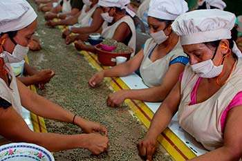 Women in the dry processing plant in Matagalpa, Nicaragua. Built to enable the cooperative to process coffee to export standard.