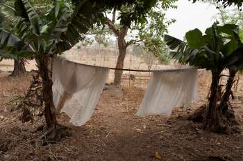 Insecticide-treated mosquito nets drying in Nigeria