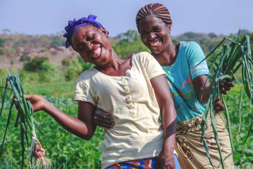 Zambia women farmers