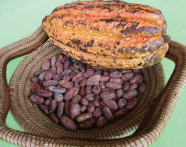 "Proyecto Adapta: ""Building climatic resilience in the fine cocoa and honey sectors"""