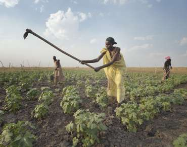 Women farming vegetable garden