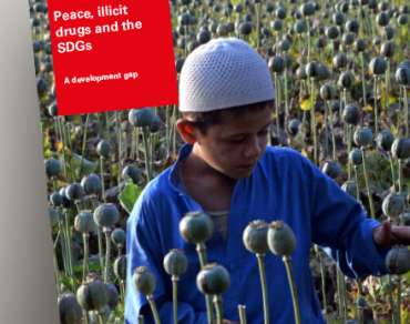 Illicit economies report cover - a boy harvests opium poppies
