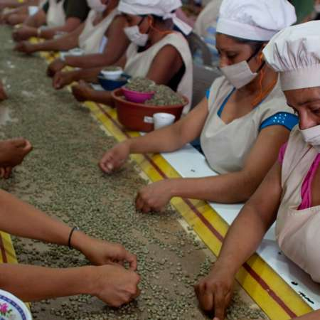 Women in masks sorting grain along conveyor belt in factory.