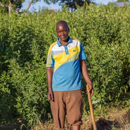 Farmer Frank Zulu standing in front of his pigeon pea crop